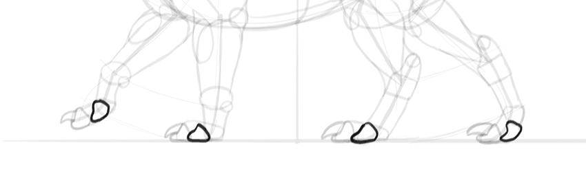 dragon shorter toes